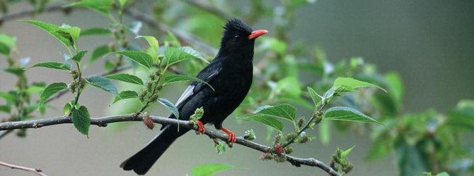 שמורת הציפורים בקלאמטיה